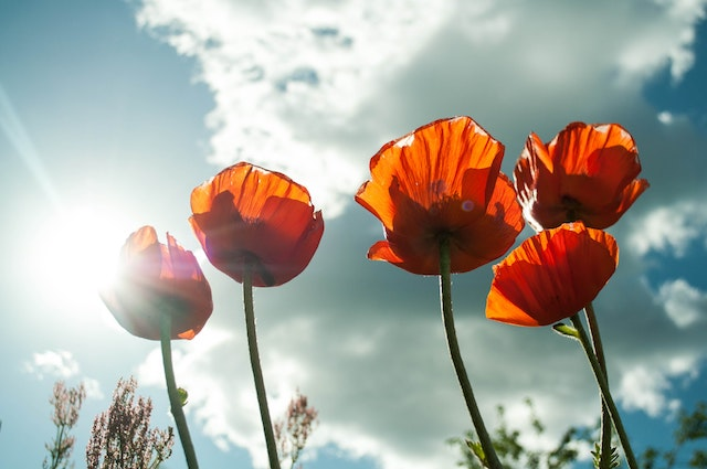 Test your class on this World War Two KS2 quiz for Remembrance Day